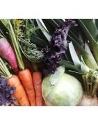 Paniers de légumes cultivés à Piffonds 89330 dans le Gatinais en Bourgogne